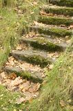 Mossy Staircase with Fallen Maple Leaves Stock Photos