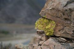 Mossy sten Fotografering för Bildbyråer