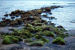 mossy stenar Royaltyfri Bild