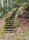 Mossy Steps Stock Photos