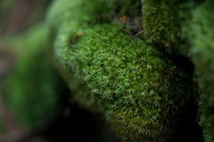 Mossy stone. Close-up green mossy stone at mountains Royalty Free Stock Image