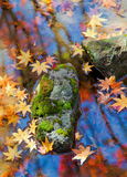 Mossy stone and Falling leaves in Autumn. In a serenity stream, one mossy stone and many falling leaves formed a colourful picture stock images