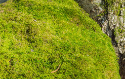 Mossy stone Stock Images