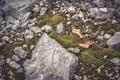 Mossy stone in highlands with falling leaves  during autumn season Stock Image