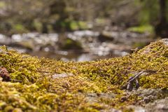 Mossy stone at stream in woods. A mossy stone near a stream within the woods with detailed view Royalty Free Stock Photo