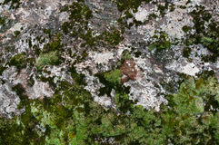Mossy stone texture Royalty Free Stock Image