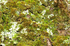 Mossy stone texture Stock Images