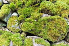 Mossy stone wall detail Royalty Free Stock Photos