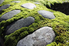 Mossy stone wall Royalty Free Stock Image