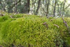 Mossy stone wall in a wet forest Stock Images