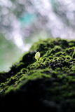 Mossy Stone and Young Green Plant with the Waterfall Background Stock Image