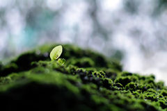 Mossy Stone and Young Green Plant with the Waterfall Background Royalty Free Stock Photography