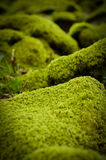 Mossy Stones Stock Photography