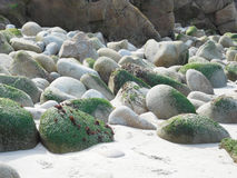 Mossy Stones on a Beach Stock Photography