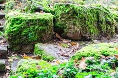 Mossy stones Stock Photos