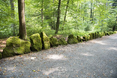 Mossy  Stones on Forest Alley Stock Image