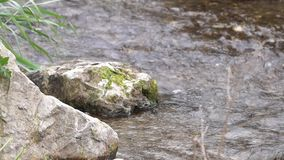 Mossy Stones in the River.. Close up of Mossy Stones in the River. Flowing Water stock video