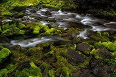 Mossy stream. Moss covered rocks and mountain stream in fall stock photo