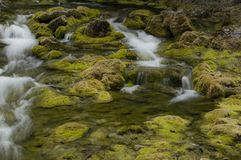 Mossy Stream Royalty Free Stock Photo