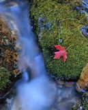 Mossy Stream Stock Photography