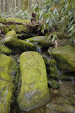Mossy Stream Falls. Mossy trickling falls in a Great Smoky Mountains stream deliver a rich, detailed  green composition with nearby rhododendron Royalty Free Stock Images