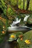 Mossy stream with leaves Royalty Free Stock Photos