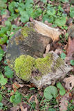 mossy stubbe Arkivfoton
