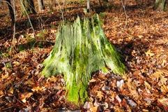 Mossy Stump Stock Photo