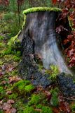 Mossy stump Royalty Free Stock Photos