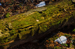Mossy stump. In the leafs and snow Royalty Free Stock Photos