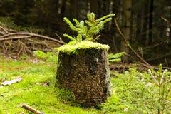 Mossy stump Stock Photography