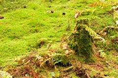 Mossy stump Royalty Free Stock Photos