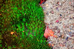 Mossy Surface in Autumn Taiga Forest Stock Photography
