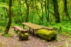 Mossy table and benches in ravine Chudo-Krasotka, Sochi, Russia Stock Photo