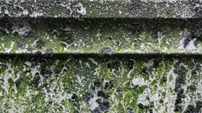 Mossy texture. Gray concrete covered with moss for background Stock Photography