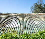Mossy tile roof Royalty Free Stock Image