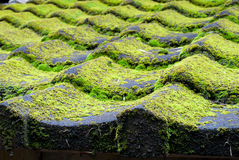 Mossy tiled roof Stock Photos