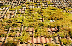 Mossy tiled roof Stock Photo
