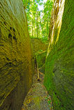 Mossy trail through a natural rock ravine Royalty Free Stock Photos