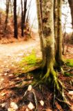 mossy tree Royaltyfri Foto