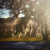 Mossy tree. Along hwy. 75, Florida Stock Photography