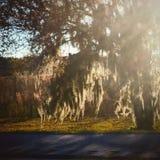 Mossy tree Stock Photography
