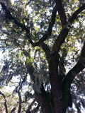 Mossy Tree Stock Photos