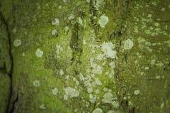 Mossy tree bark Stock Photography
