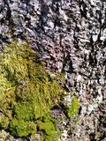 Mossy tree bark Royalty Free Stock Photography