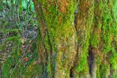 Mossy tree bark texture Stock Image