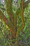 Mossy tree bark texture Royalty Free Stock Images