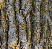 Mossy Tree Bark Stock Image
