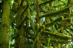 Mossy Tree Branches Stock Photos