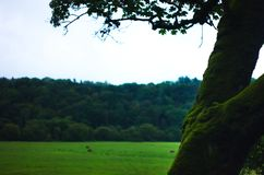 A mossy tree with grass field backgound stock photos